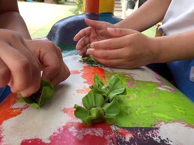 柿の木 西高殿若葉幼稚園 にしたかどのわかばようちえん