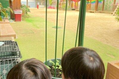 アサガオ 西高殿若葉幼稚園 にしたかどのわかばようちえん